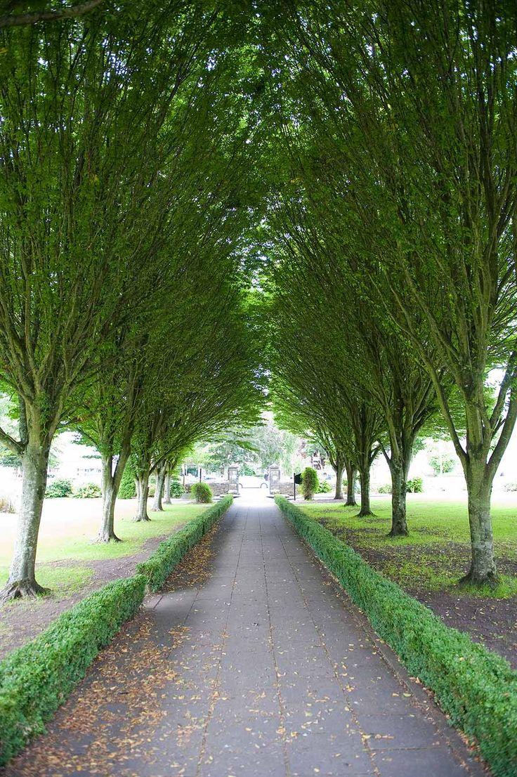 Best 25 Limerick Ireland Ideas On Pinterest Limerick