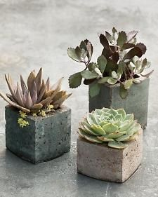 Use milk cartons to create cube-shaped hypertufa vessels, each sized for a single succulent.