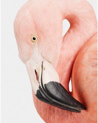 { theanimalprintshop.com } @Amanda Snelson Nicholson  (Funky Flamingo)