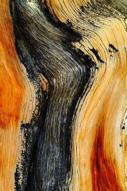 les 25 meilleures id es de la cat gorie arbres abstraits sur pinterest peinture arbre abstrait. Black Bedroom Furniture Sets. Home Design Ideas