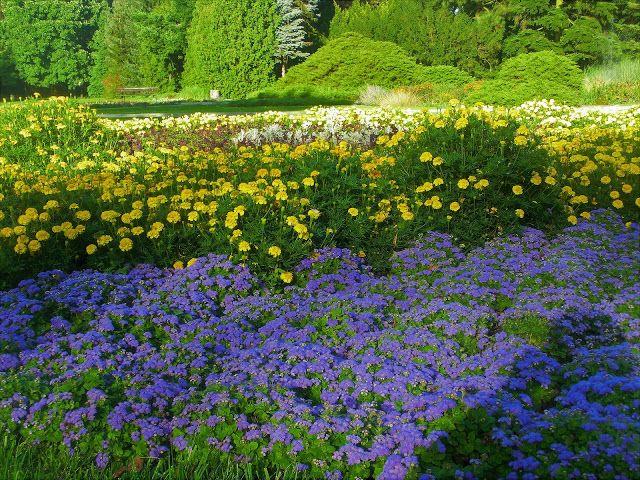 WWW Wiersze Wycieczki Wspomnienia: Ogród Botaniczny w Poznaniu