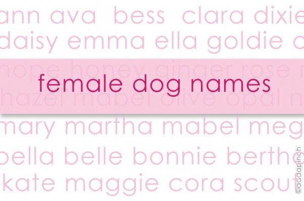 Dog Names | Some of the best names for female dogs - or any female pets! Love these names!  from addapinch.com