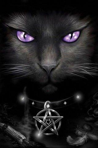 NOIR Black Beauty :: Black Magick Cat
