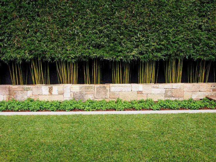 Slender weaver bamboo | #plantingideas #topiary #plants #formalplanting #gardens #landscapedesign #gardendesign #ideas #coastalgardens #droughttolerant #design #succulents #cactus #balconygarden #greenwalls #verticalgardens #hedges