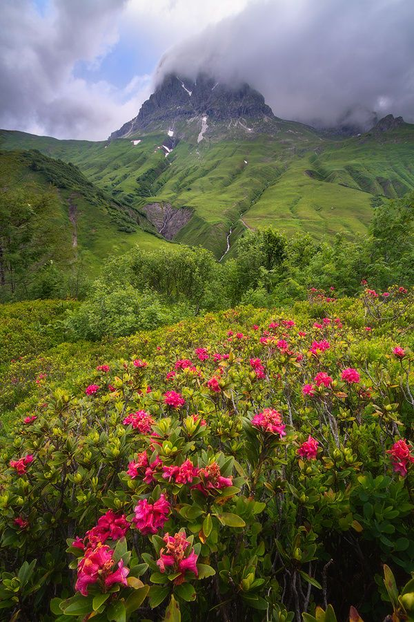 The Ram's Garden at Vorarlberg, Western Austria by David Sonnweber