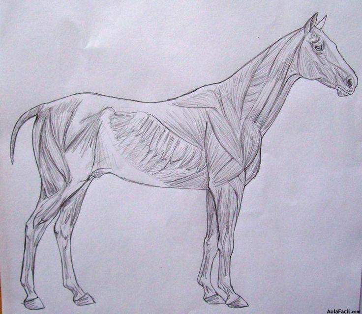 patas traseras de caballo dibujo - Buscar con Google