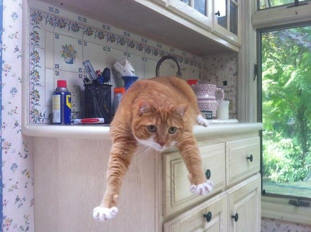 Is it a bird? Is it a plane? No, it's Milo, the Super Cat!Cat Pics, Super Cat, Kity Kitty, Gorgeous Animal, Cat Tabby, Amazing Animal, Cat Lady, A Cat Lika, The Roller Coasters