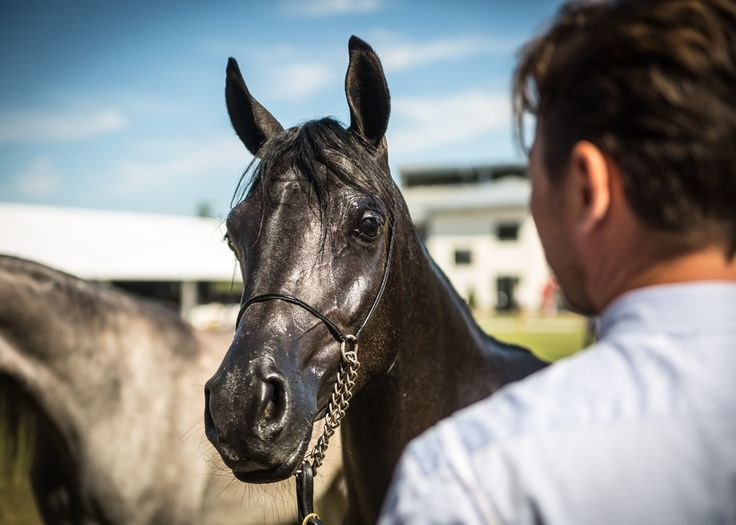 #horse #horses #horsephoto #horsephotography  #horsephotographer #horseworld #horselove