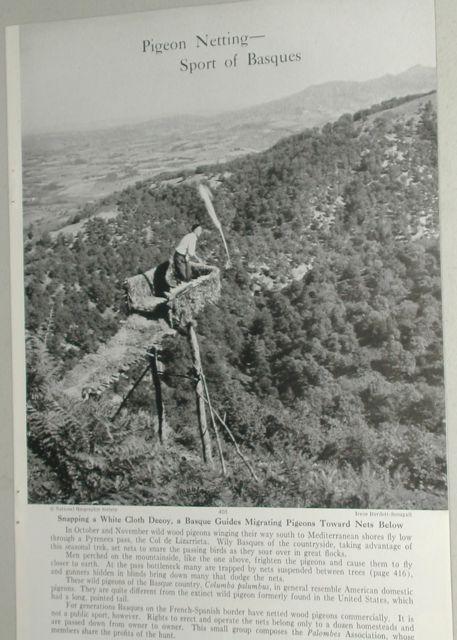 Una revista de 1949 habla de la caza de palomas en Euskadi