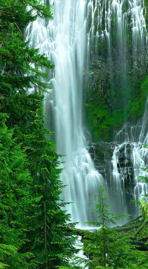 Willamette National Forest, Oregon, USA
