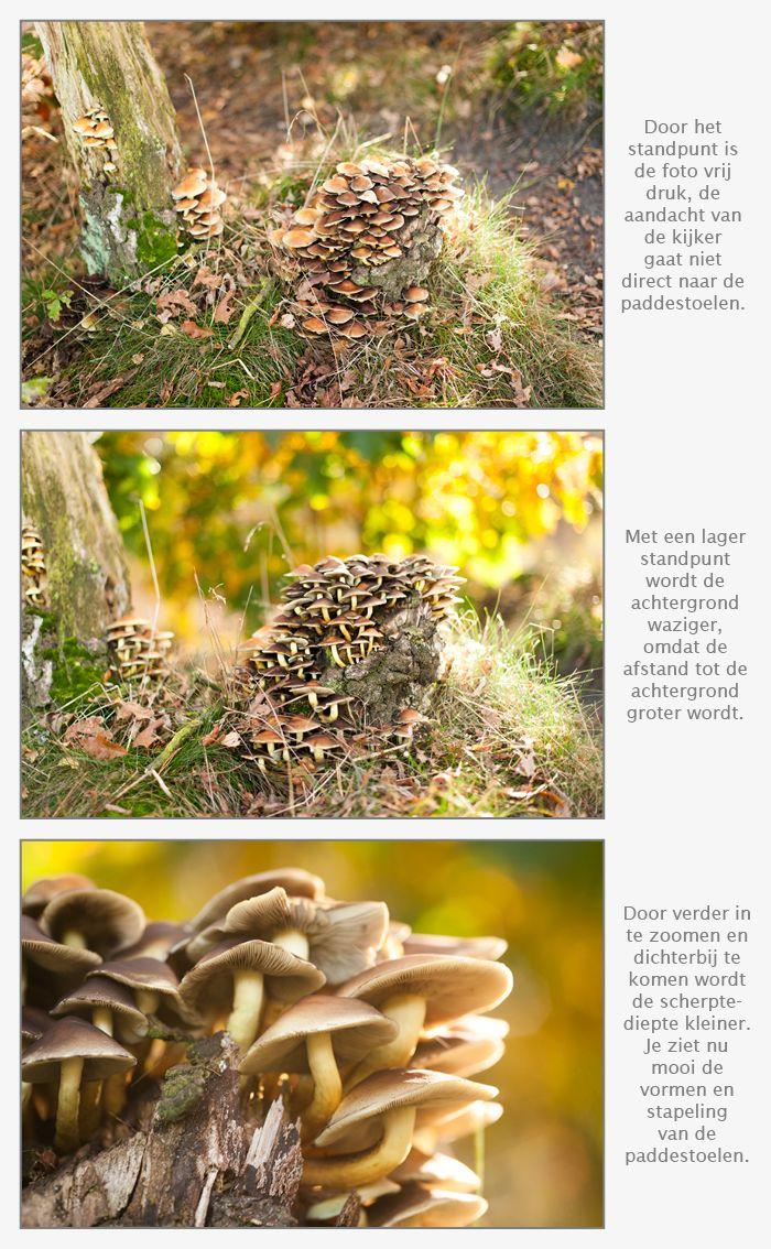 Paddestoelen fotograferen - Tps Kies een laag standpunt bij het fotograferen van paddestoelen
