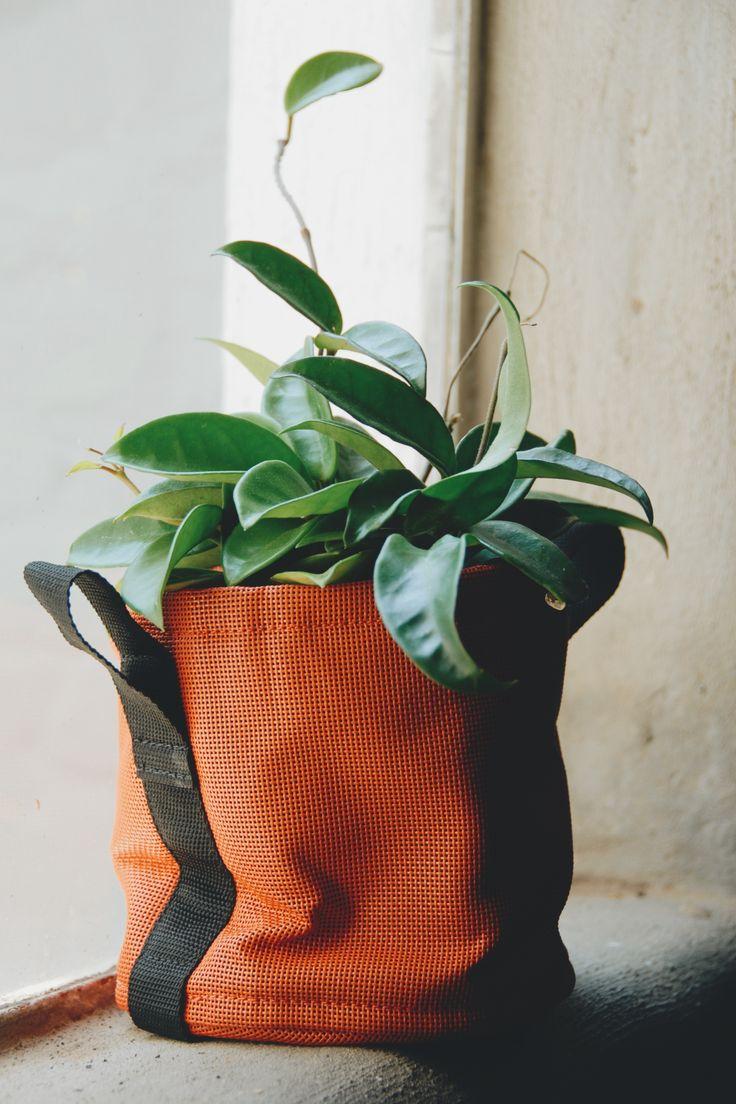 Plants ❤️️