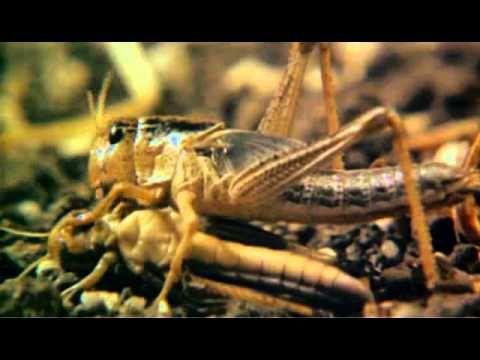 ▶ Der Exorzist 2 - Der Ketzer (HQ-Trailer-1977) - YouTube