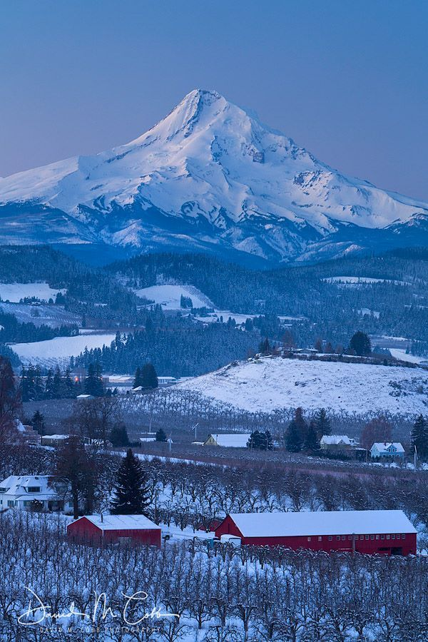 David M Cobb Photography  View over the orchards of Hood River, Oregon and Mount Hood this morning in balmy 4F (-16C) weather. A crisp cool day with a clear view of the mountain snows at the blue hour before sunrise.