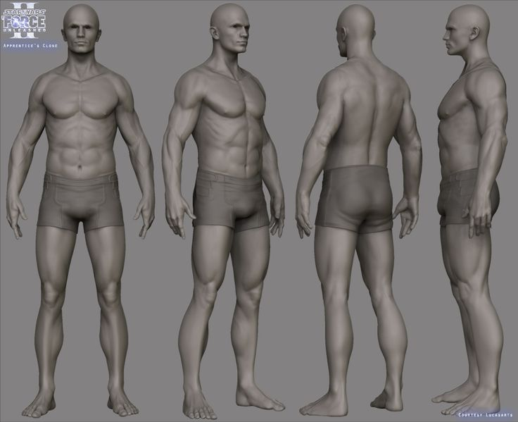 ANATOMY HELP and Advice - Page 2 - Polycount Forum