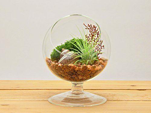 "Bliss Gardens Air Plant Terrarium / 4"" Round Glass Pedestal Stand / River Rocks Sand / Sea Fan / Moss & Shells"