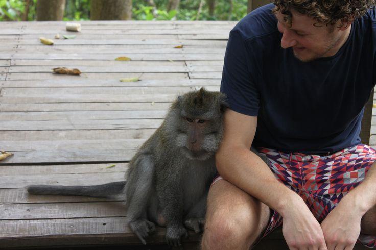 Un mono muy mono en el Ubud Monkey Forest.