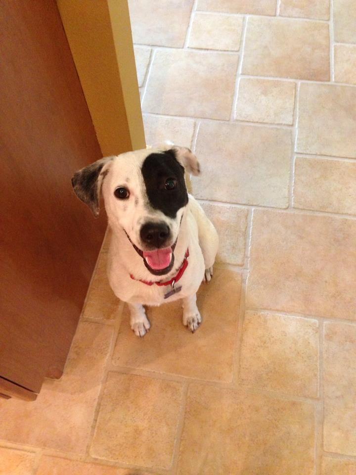 Puppy rescue tampa florida
