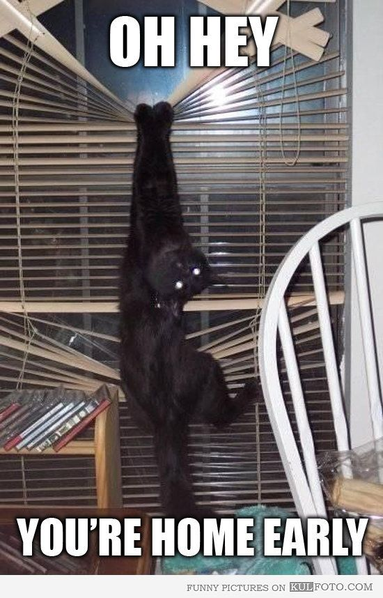 "Oh hey, you're home early... - Funny cat hanging from window blinds looking busted: ""Oh hey, you're home early!"""