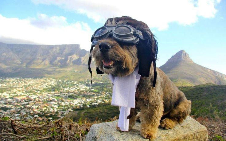 Oscar in Cape Town