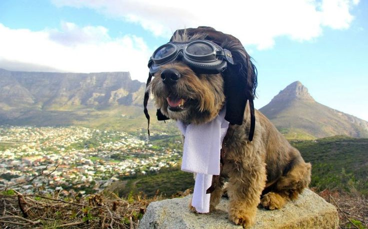 """A dog who was rescued from """"doggy death row"""" in South Africa before becoming famous for his tour of the world, has died after being hit by a car in California. There has been outpouring of condolence messages on Oscar's official Facebook fan page, where a notice about his death was posted. Oscar was adopted from the SPCA in Cape Town eight years ago, just a day before he was due to be put down. //   Picture: Joanne Lefson"""