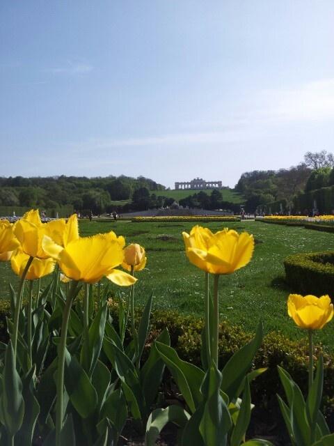 Schoenbrunn palace in bloom