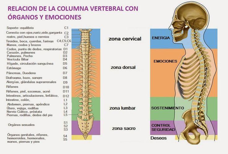 Relación de la columna vertebral con los órganos y las emociones
