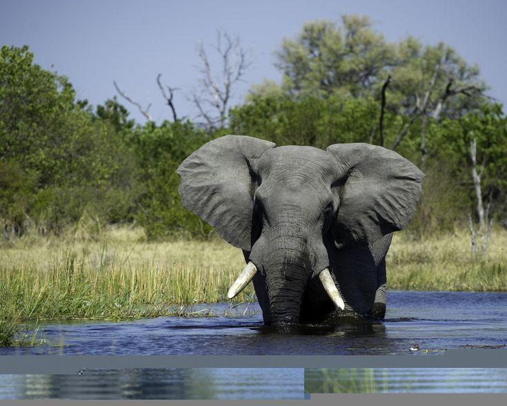Botswana Holidays Gallery Image 1