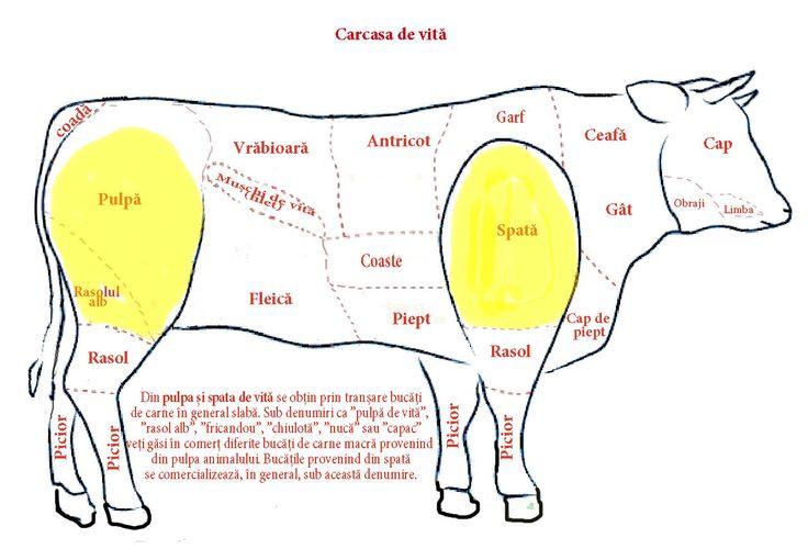 Cum gătim carnea de vită? Cum se numesc piesele obținute din carcasa de vită și cum legătim? Cum gătim pulpa de vită? Ce este mușchiul de vită? Cum gătim...