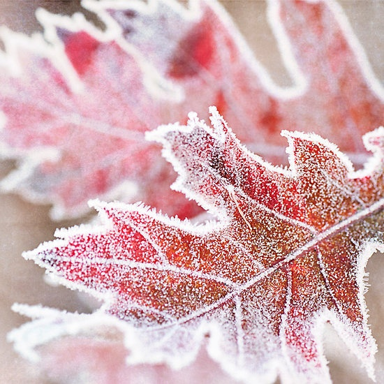frost kissing the leaves.