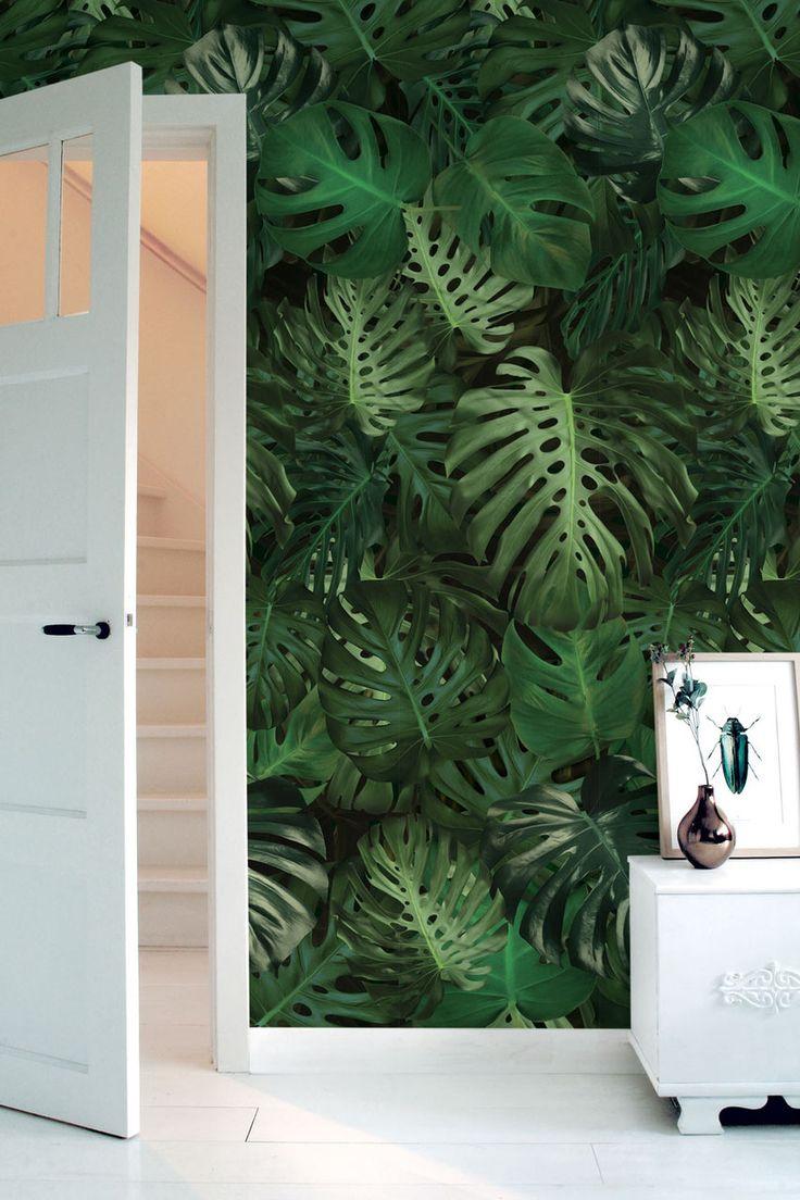 Behang met tropisch patroon van groene Monstera bladeren. Decoreer een ruimte met een van onze tropische behangpatronen van palm of monstera.