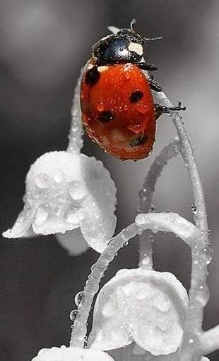 Ladybird. Ok, is it cute? Maybe not a word that comes to mind unless you are a ladybird hahaha but I like the photo
