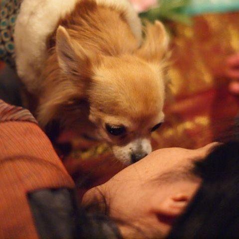 【2011・Oosaka】MOMOKO #チワワ #osaka #dog #chiwawa #愛犬 #愛犬家 #愛犬🐶 #animal #動物殺傷処分ゼロへ #動物 #動物実験反対 #アニマルキングダム #無償の愛 #動物が教えてくれること