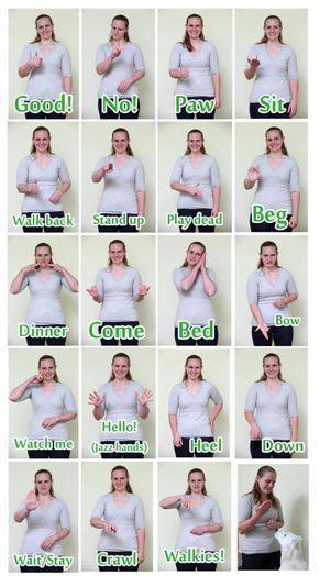 Hand signals (signing) to train deaf dogs. #teachsignlanguagetokids