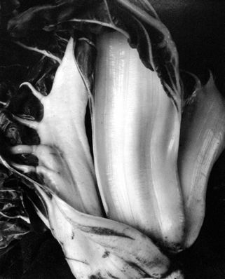 Edward Weston, looking at food in a new way. try to make people see the beauty in the everyday object.