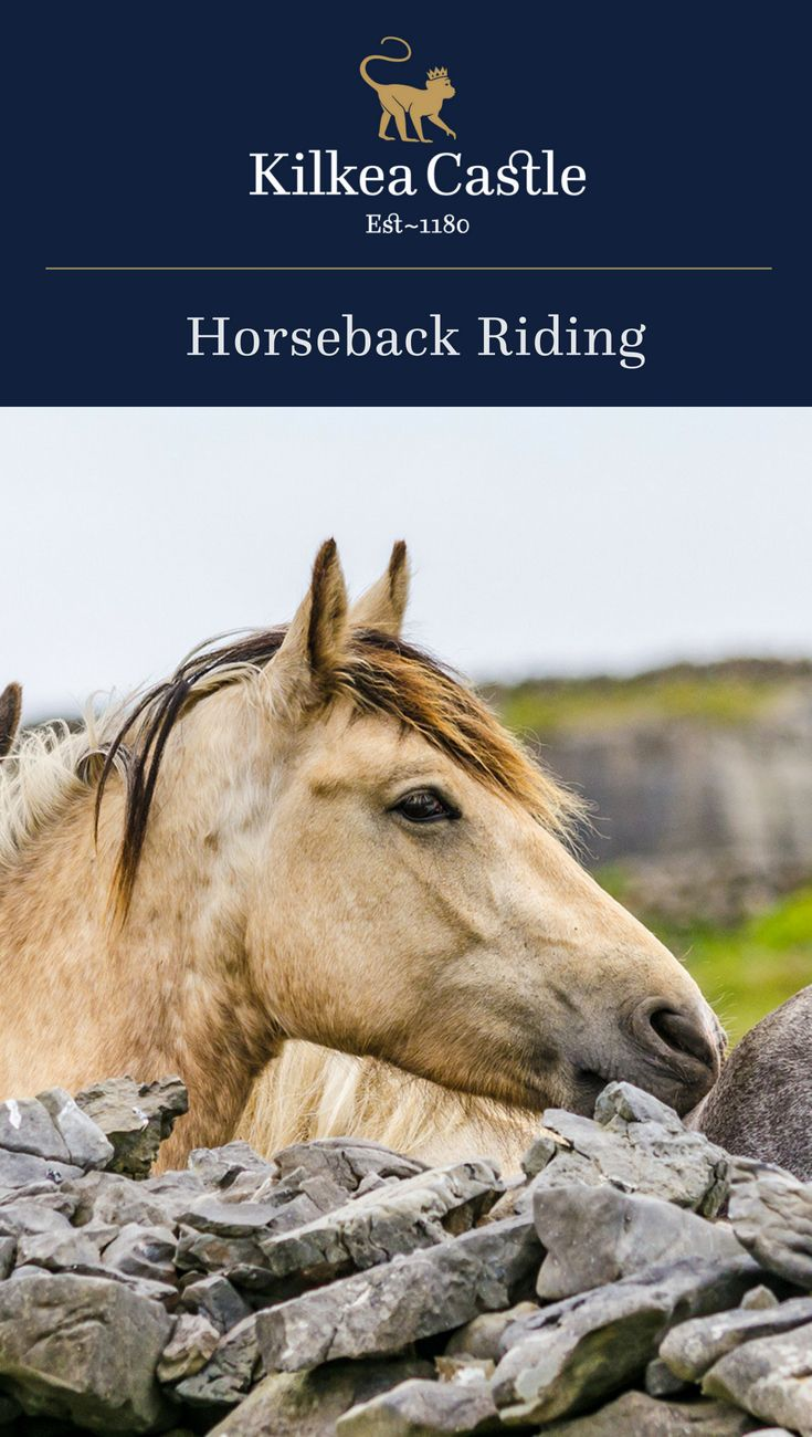 """Of course, it's not for nothing that Kildare is known from Australia to Kentucky to the Arabian deserts as the """"Thoroughbred County"""". Come gallop with us through the heartland of Equestrian Ireland. We offer memorable horse-riding experiences and help you discover the thrill of exploring our beautiful countryside on horseback."""