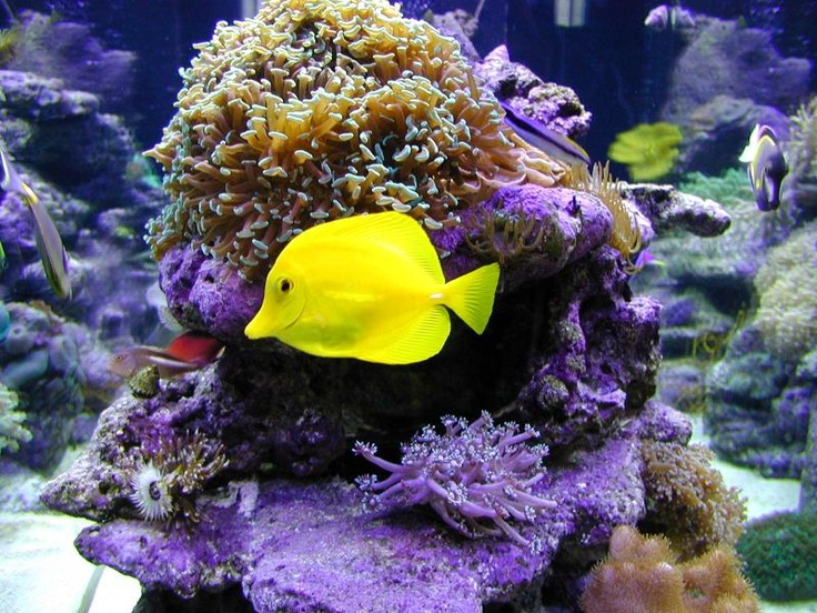 17 Best Ideas About Exotic Fish On Pinterest Pretty Fish