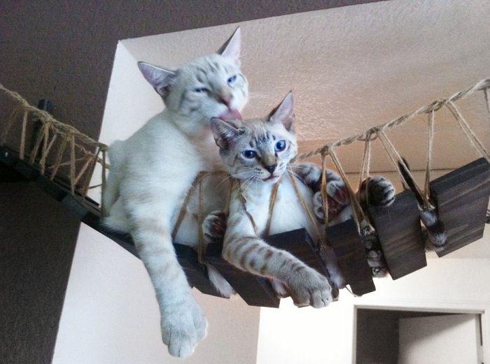 ペットのための家   家の中にネコ専用の橋を作ろう ...