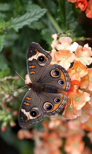 """butterfly / """"Não existe um caminho para a felicidade. A felicidade é o caminho."""" (Mahatma Gandhi)"""
