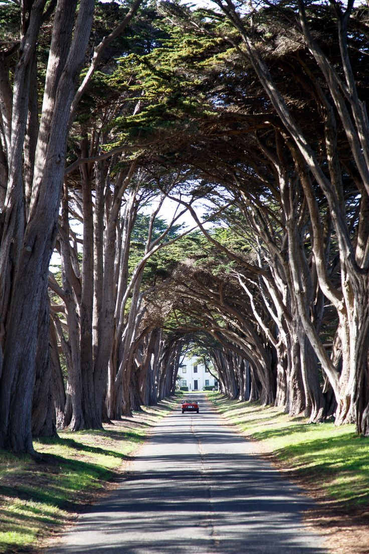 Day Trip: Point Reyes & Tomales Bay - Hither and Thither