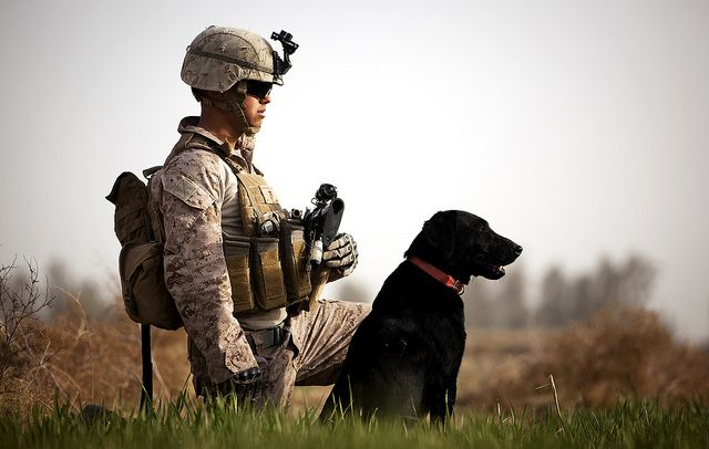No, they are not duck hunting.  The Lab is an IED detection dog being handled by L/CPL Nick Lacarra.