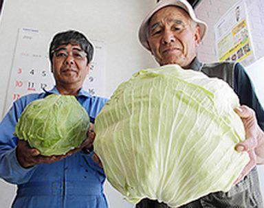 Deformed Vegetables, Fruit Reportedly Pop Up Around Japan Nuclear Plant