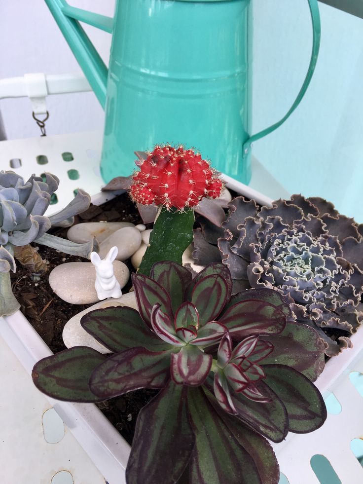 Mini garden. Succulent