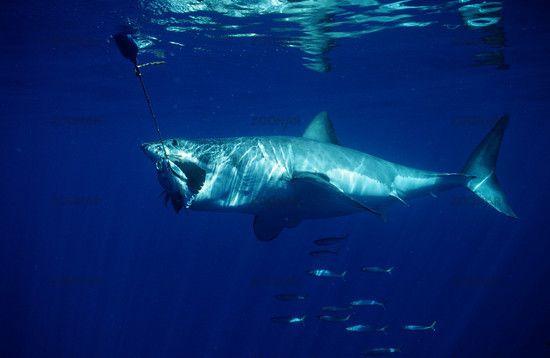 Pazifischer Ozean Tiere | Pazifik Reiseführer