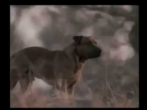 Jock of the Bushveld (1986) - YouTube