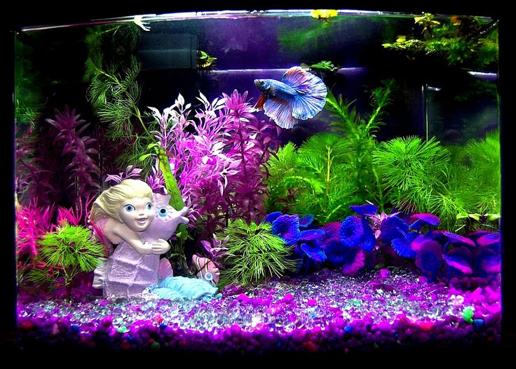 22 best betta tank ideas images on pinterest fish for Mermaid fish tank