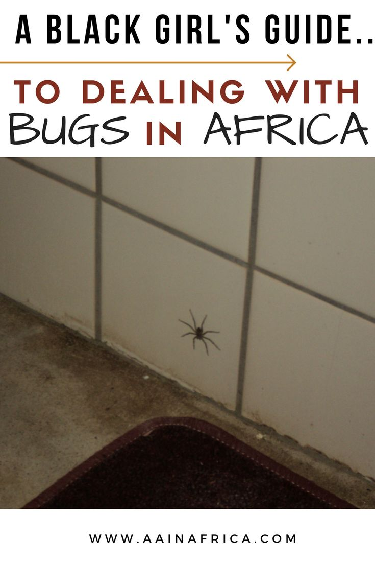 Learn how to deal with bugs while living abroad in Africa!  Back to Africa |African travel |Moving to Africa | Namibia | Africa | Cultural Adjustment in Africa | Black travel | Travel Noire | Black expats | Americans in Africa |African American in Africa | |Black Americans in Africa | Expats in Africa|Move to Africa | Living in Africa |African insects|Nature in Africa|African climate|Fear of spiders