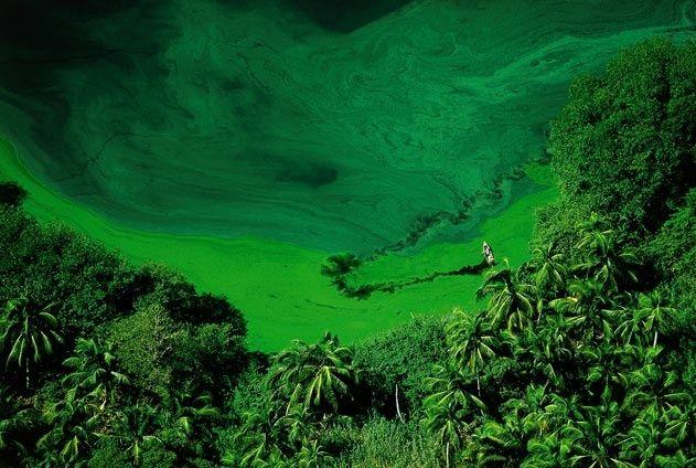 YannArthusBertrand2.org - Fond d écran gratuit à télécharger || Download free wallpaper - Lagune de Los Micos dans la région de San Pedro Sula, Honduras (15°47' N - 87°35' O).