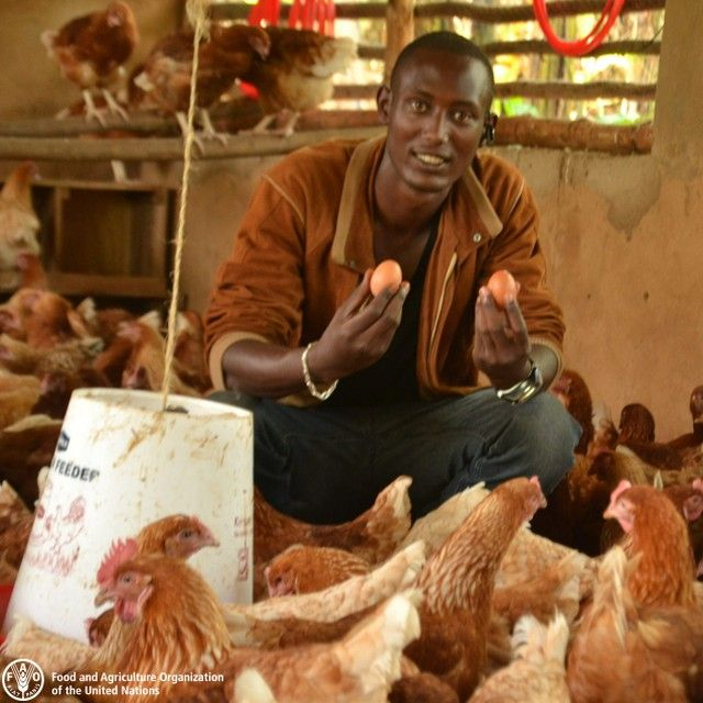 Poultry farming promoted by the Africa Solidarity Trust Fund project to support unemployed youths in Ngozi, Burundi. The majority of rural youth are employed in the informal economy as contributing family workers, subsistence farmers, home-based micro-entrepreneurs or unskilled workers. They typically earn low wages, are employed under casual or seasonal work arrangements and face unsafe, often exploitive working conditions that compel many to migrate to urban areas. Re-engaging youth in…