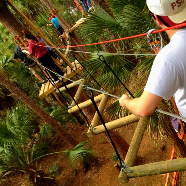 Obstacle course in the trees.                                                                                                                                                                                 More